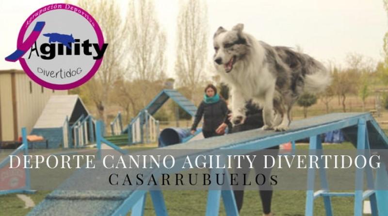 Deporte canino en Casarrubuelos Agility Divertidog