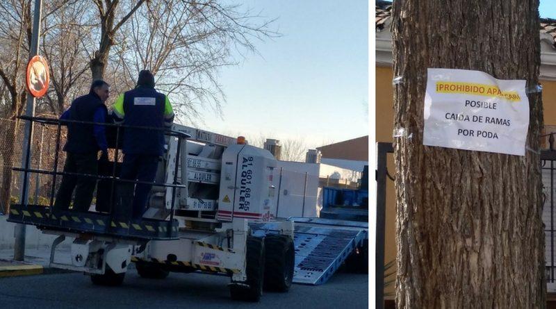 realización de podas de árboles en Casarrubuelos